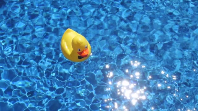 Duck in a swimming pool.