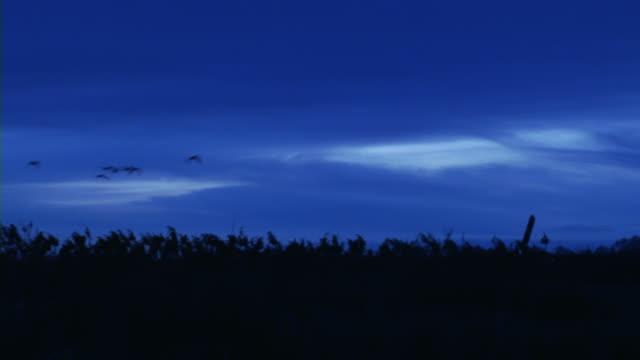 Ducks at Dawn 002 video