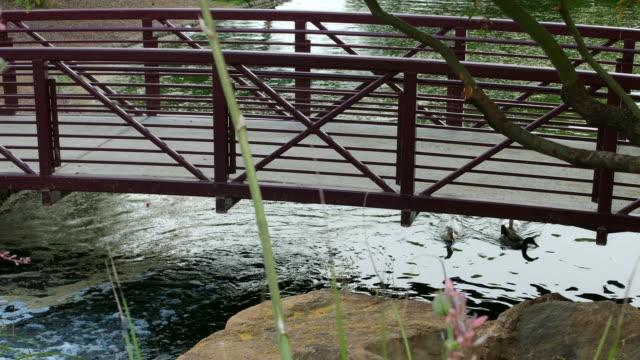Ducks Swimming Under Bridge in Duck Pond