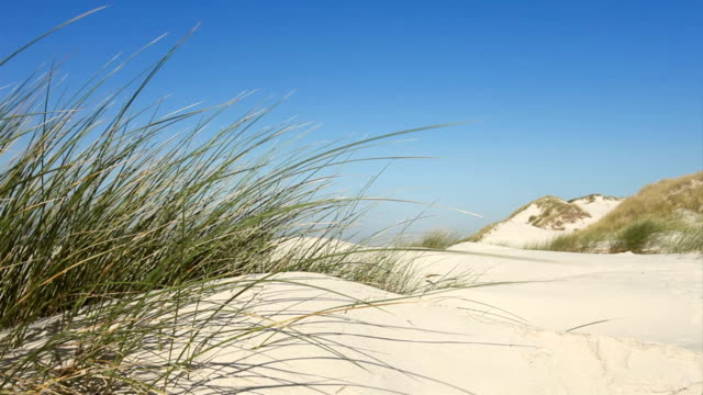 dune grass at coast in wind video