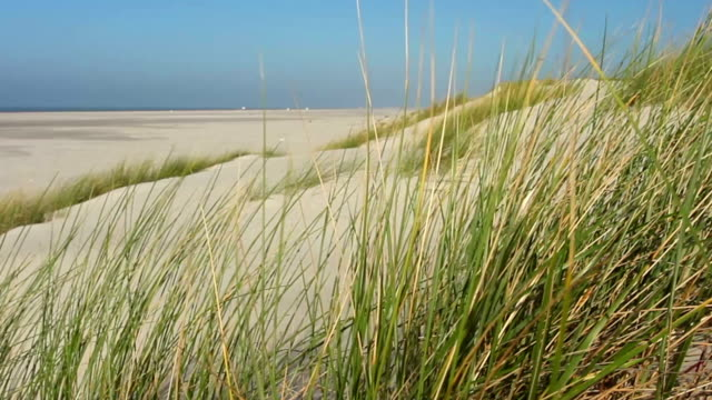 dune grass at coast, move to the left video