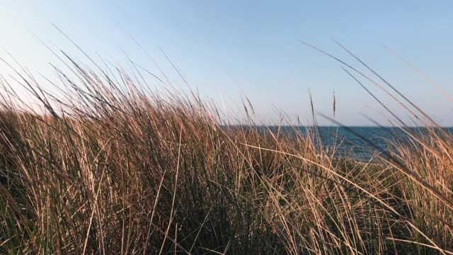 Dune grass on the beach Dune grass on the beach, slow motion denmark stock videos & royalty-free footage