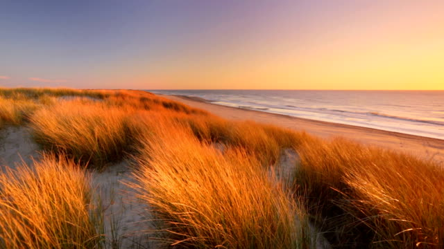 Dunes and beach at sunset on Texel island, The Netherlands video