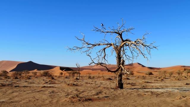 dünen in namibia sossusvlei gebiet mit toten vlei im vordergrund 4k video - afrikanische steppe dürre stock-videos und b-roll-filmmaterial