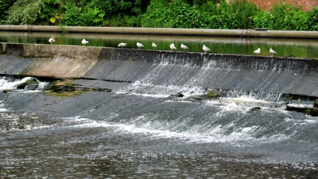 Durham river wear, with seagulls video
