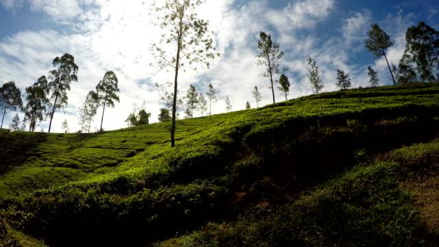 vídeos de stock e filmes b-roll de during the magic ella - colombo train trip in sri lanka you'll see a huge quantities of square kilometers of famous ceylon tea plantations. - sri lanka