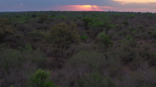 Dusk over the Kruger National Park video