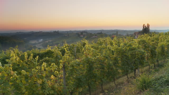 HD TIME LAPSE: Dusk to Night Over Vineyards video
