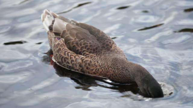 夕暮れ洗い水 - 水鳥点の映像素材/bロール