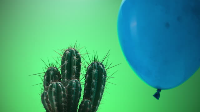 SLO MO LD Dust filled balloon popping when touching a cactus
