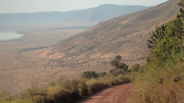 CLOSE UP: Dusty road descending into astonishing Ngorongoro conservation area AERIAL CLOSE UP: Flying above overgrown lush jungle vegetation, big cactuses and arid bushland grassland savannah surrounding dusty steep road descending into breathtaking Ngorongoro conservation area tanzania stock videos & royalty-free footage