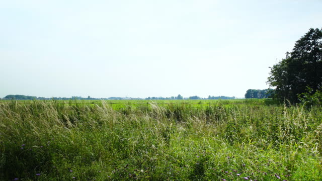 Dutch grass fields Dutch scenery with open fields with plants in the foreground and little towns in the background pasture stock videos & royalty-free footage