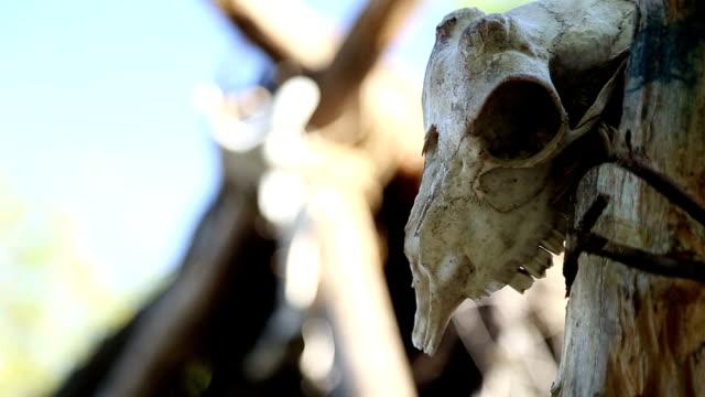 stockvideo's en b-roll-footage met woning van de steen of bronstijd, de schedels en botten van dieren - dierlijk bot