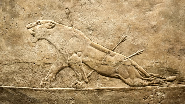 Dyeing lioness. Hunting relief from Palace of Assurbanipal video