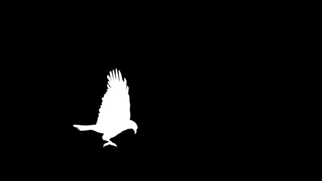 Eagle Attack (Loopable) video