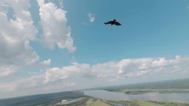 vídeos de stock, filmes e b-roll de águia voa sobre vale com rio curvo e lago espelho - alto descrição geral