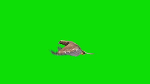 グリーンスクリーン上のイーグルフライングアニメーション。動物、野生動物、ゲーム、学校に戻る、3dアニメーション、短いビデオ、フィルム、漫画、有機、クロマキー、キャラクターア� - 鳥点の映像素材/bロール