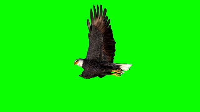 eagle gliding  2 - green screen eagle gliding  2 - green screen hawk bird stock videos & royalty-free footage