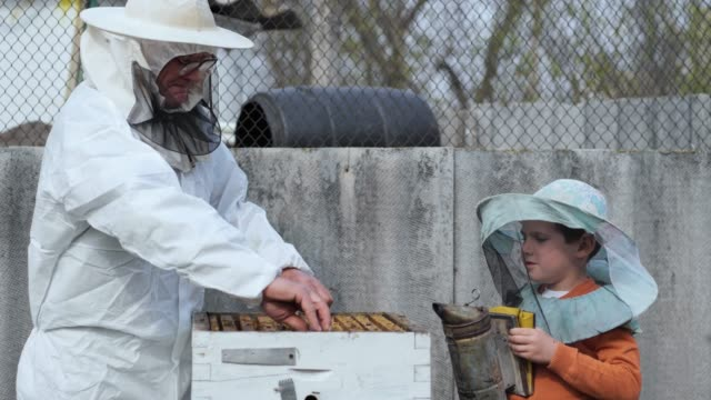 sviluppo precedente dei bambini, il bambino con l'apicoltore nonno fumiga le api negli alveari, rimuove i loro favi per testare il miele nell'apiario - pesche bambino video stock e b–roll