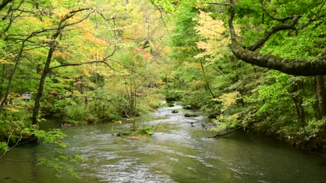 Early Autumn of Oirase Mountain Stream, Aomori Prefecture, Japan