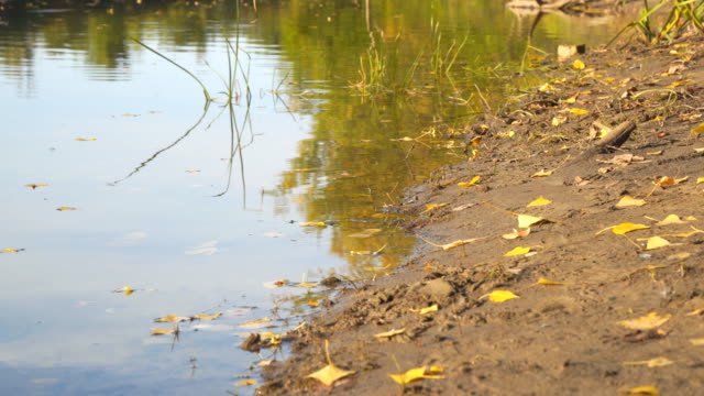 Early autumn on the river video