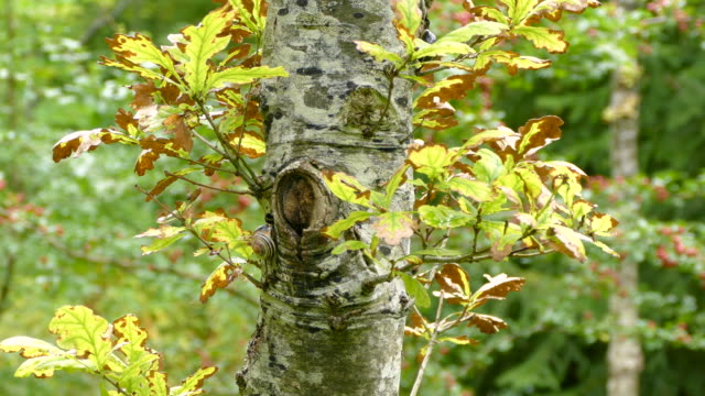 Early Autumn tree branch video