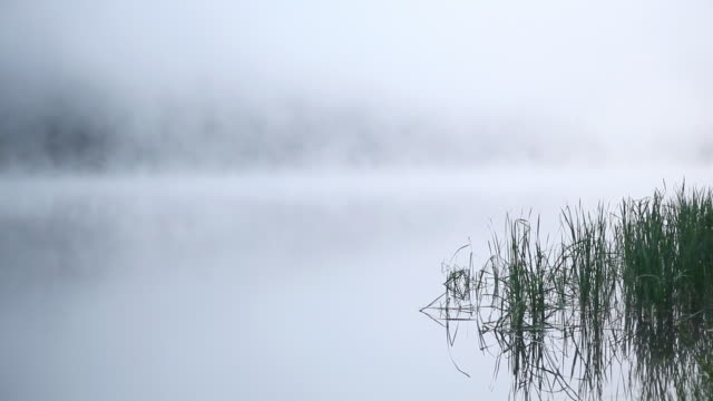 HD early morning fog on lake background video