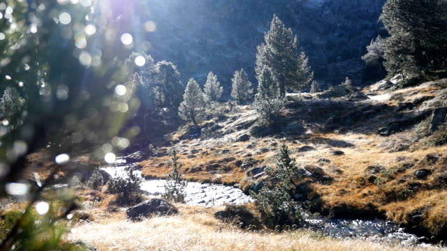 Early morning pine landscape in the Pyrenees in Autumn Mountain river and Pine Trees, rack focus at the end lleida stock videos & royalty-free footage