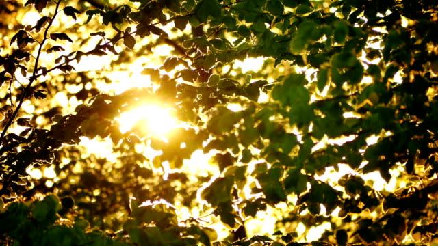 stockvideo's en b-roll-footage met vroeg in de ochtendzon opkomt via appelbomen bij zonsopgang - fresh start yellow