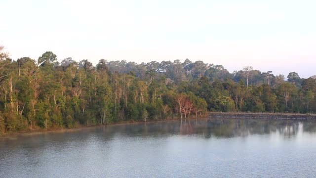 Early morning. The forest lake pond with a mirrored video