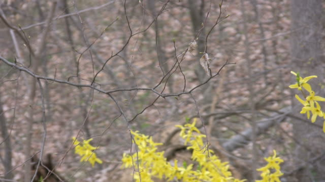 early spring forest zoom out video