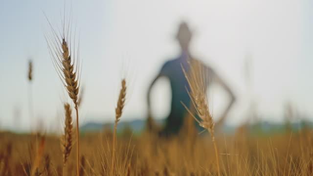 vidéos et rushes de cu oreilles de blé doré et un fermier marchant dans le champ - tige d'une plante