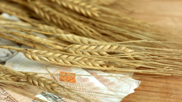 HD: Ears Of Wheat On British Pounds video