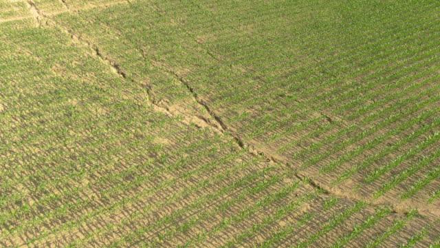 vídeos de stock, filmes e b-roll de drone: terra em campos de milho rachando nos campos de milho do calor do verão. - erodido