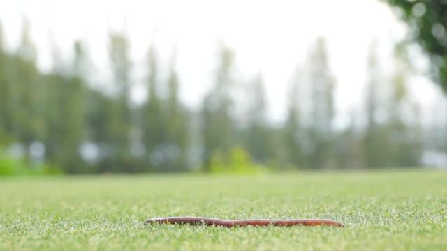 SLO MO earthworm on golf court