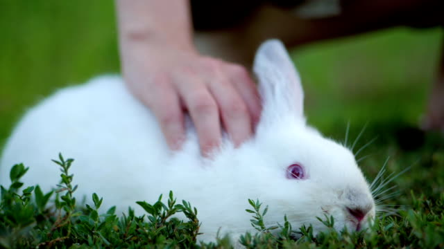 Easter adorable white bunny outdoor on green background. Female hand Strokes beloved pet. Slow motion video