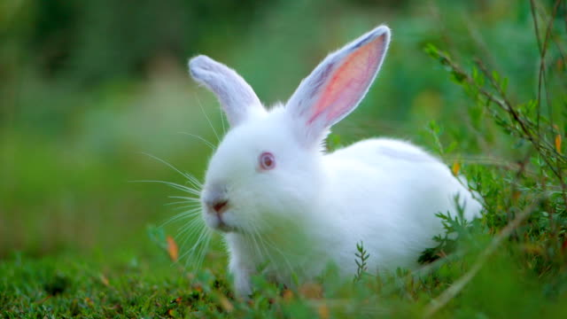 Easter adorable white bunny outdoor on green background running away. Slow motion video