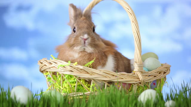 Easter basket with bunny sitting in grass