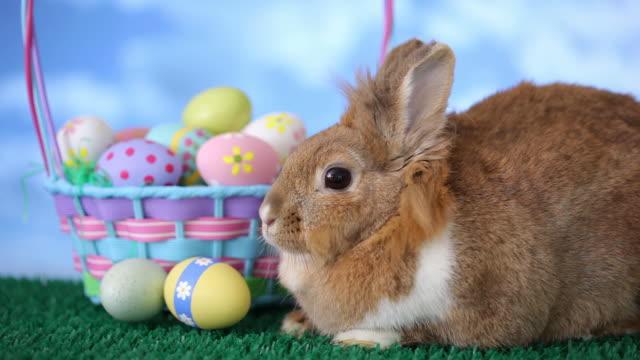 easter bunny und korb mit eiern - osterhase stock-videos und b-roll-filmmaterial