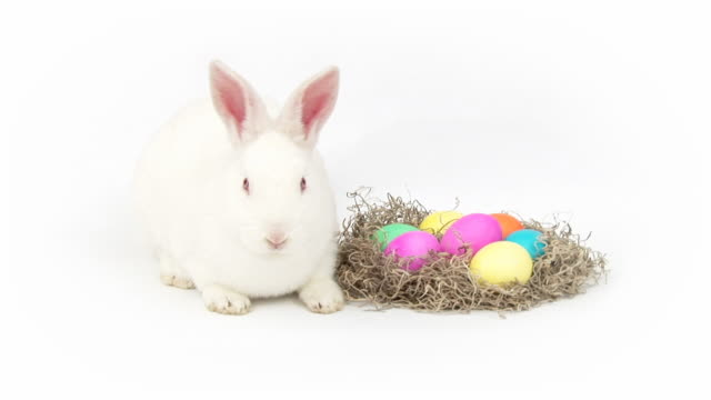 easter bunny - frohe ostern stock-videos und b-roll-filmmaterial