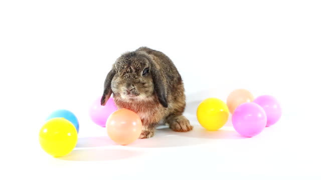 easter bunny - osterhase stock-videos und b-roll-filmmaterial