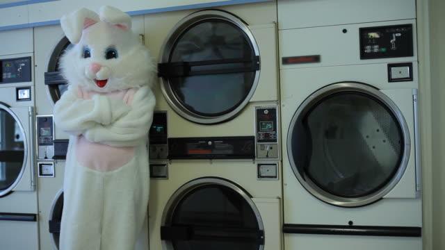 easter bunny warten auf wäscherei - osterhase stock-videos und b-roll-filmmaterial