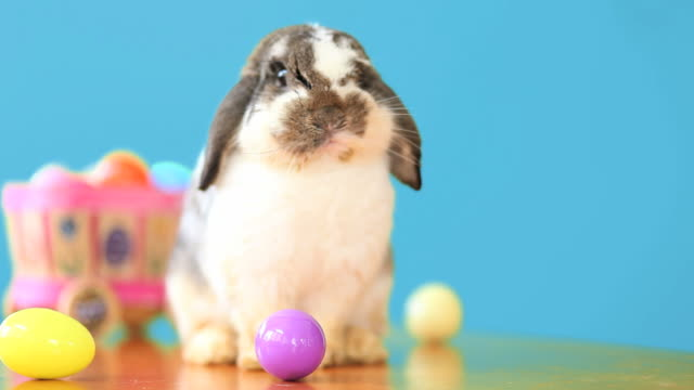 Easter Bunny With Basket video