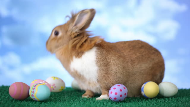 Easter bunny with eggs video