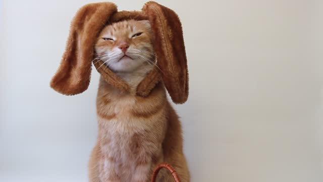 vídeos de stock, filmes e b-roll de retrato de gato da páscoa. um gato com orelhas de coelho na cabeça. - felino