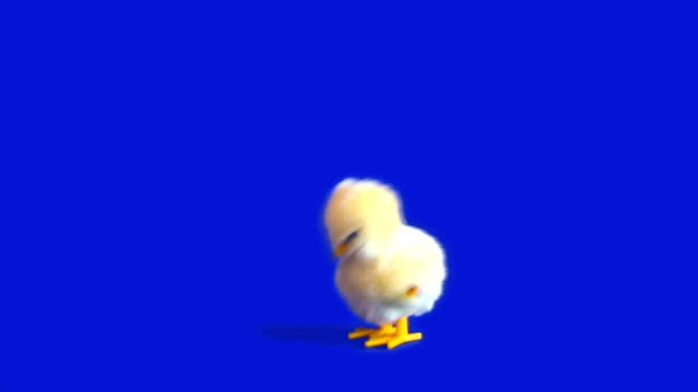 Easter Chick Wind-Up - HD 1080 video
