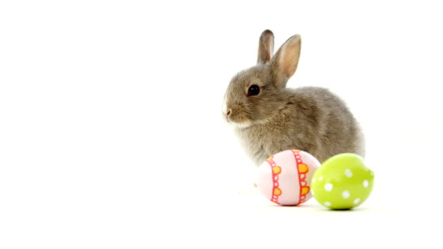 Easter eggs and Easter bunny video