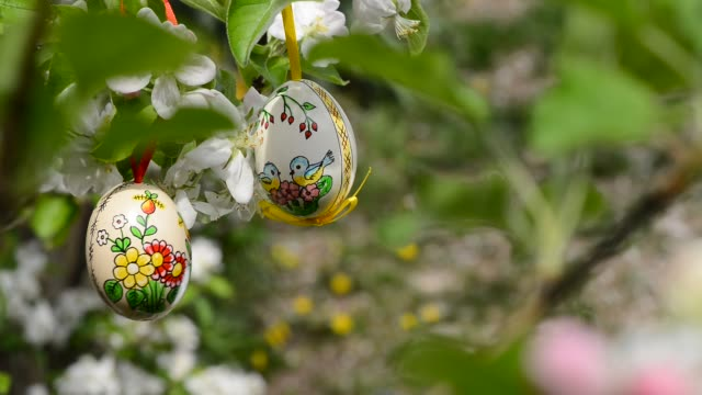 Easter eggs hanging on the twig of apple tree in the garden.Rack focus. video