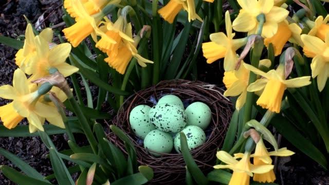 Easter eggs in nest near flowers video