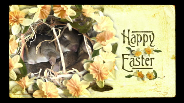 Easter video card, vintage style. Baby bunnies cuddling, spring flowers. video